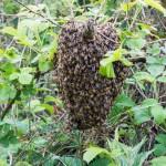 A small swarm