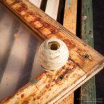 Wasp nest …