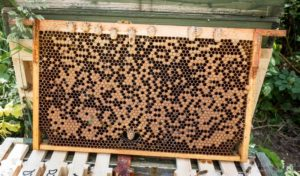 Patchy brood pattern
