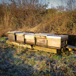 Hives in the frost