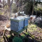 Early Spring in the apiary