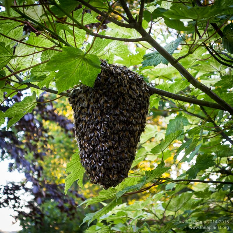 A small swarm ...