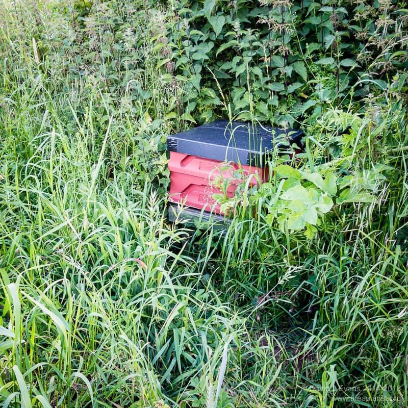 Occupied bait hive