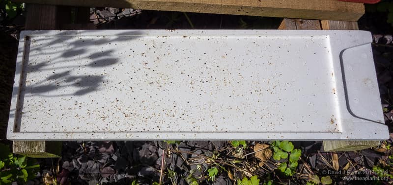 Poly Varroa tray from Thorne's Everynuc with visible mites.