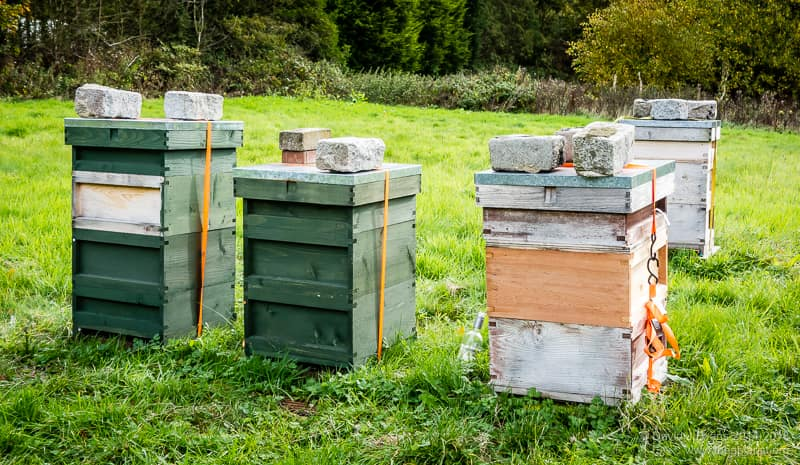 Shared apiary ...