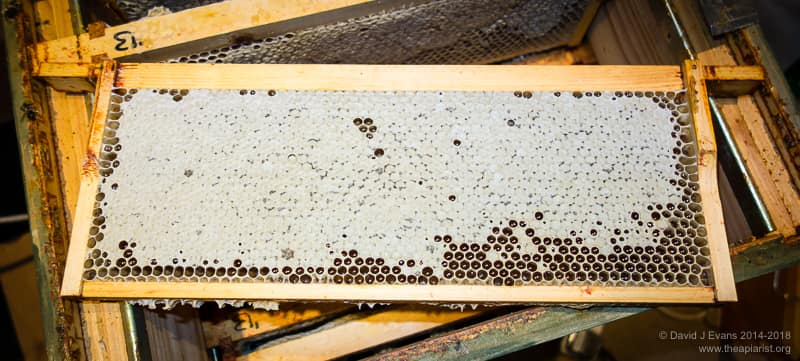 Frame of honey ready for extraction