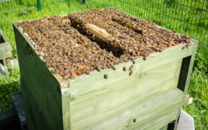 Concentrating the bees ...