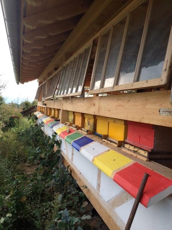 Hive entrances and windows
