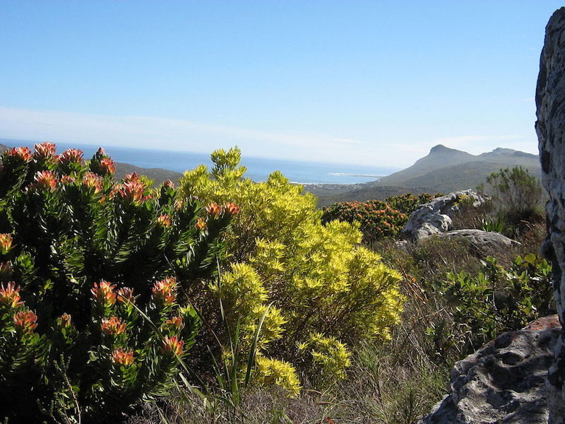 Western Cape Fynbos region of South Africa