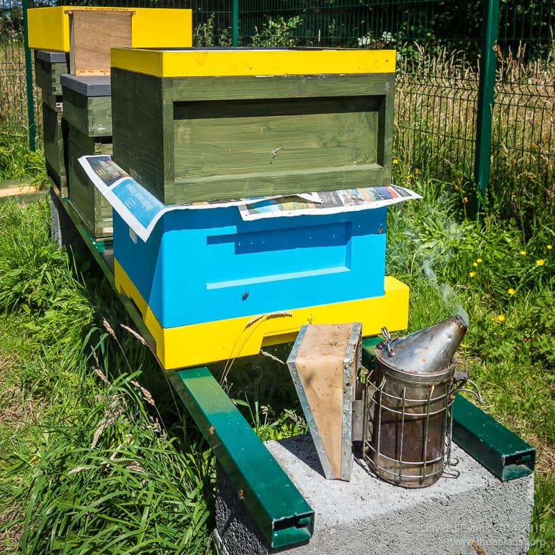 An Abelo/cedar hybrid hive ...
