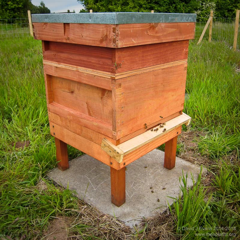 Thorne's budget hive ...