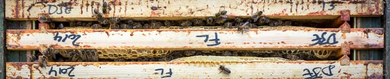 Two seams of bees