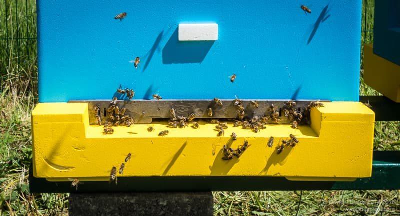 Hive entrance activity ...