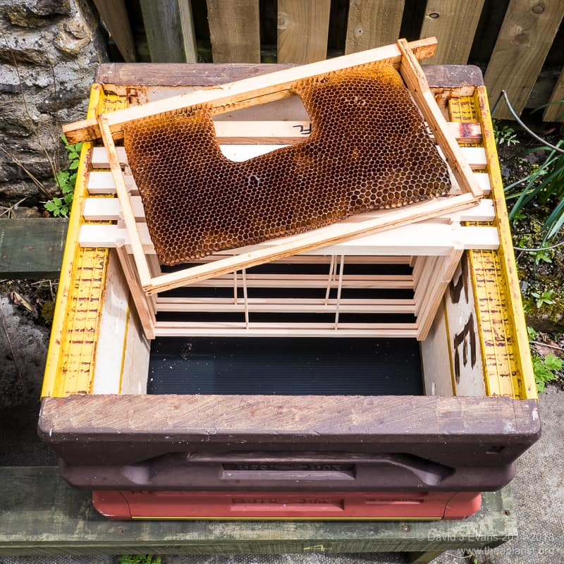 Bait hive ...