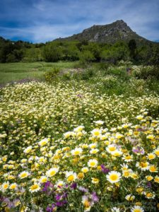 Wildflower meadow Andalucia