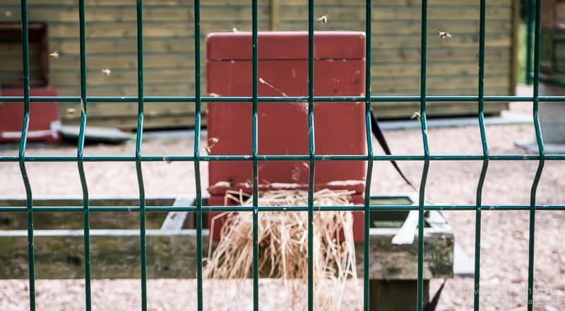 Nuc behind bars