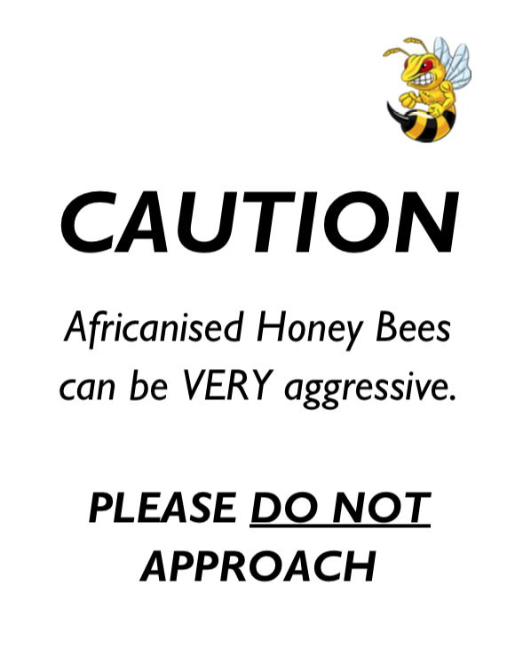 Africanised bees