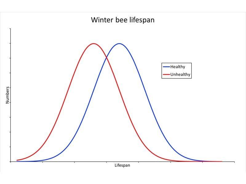 Lifespan of winter bees