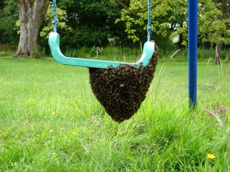 Swarm on a swing ... not ideal if it's in the next door garden