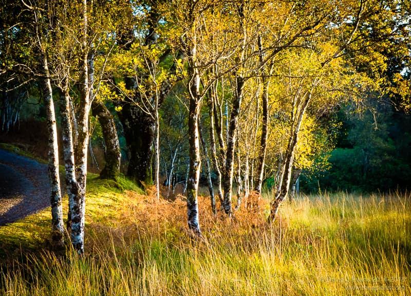 Ardnamurchan autumn