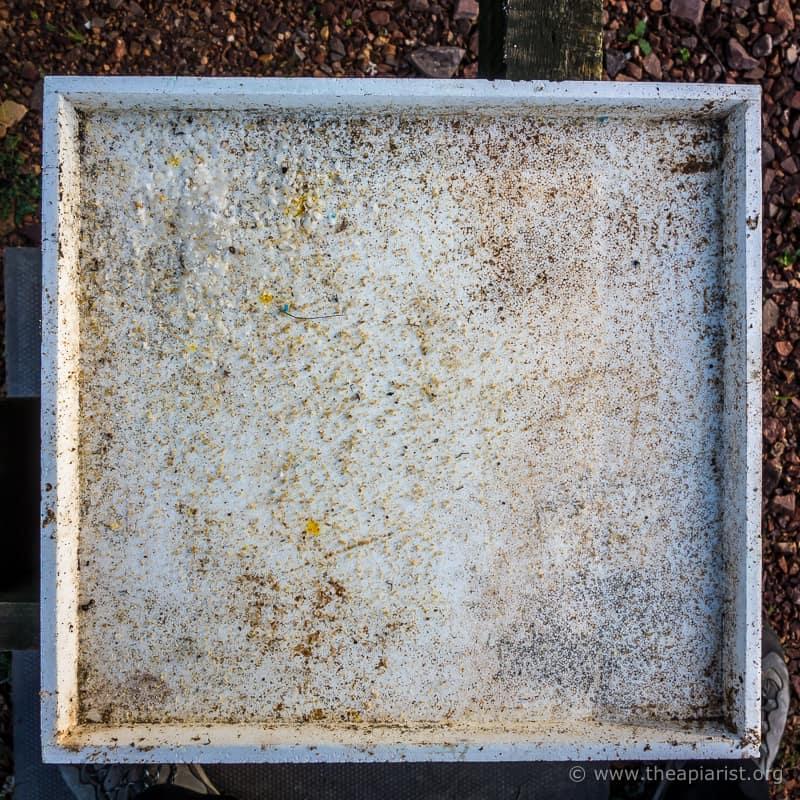Abelo poly Varroa tray