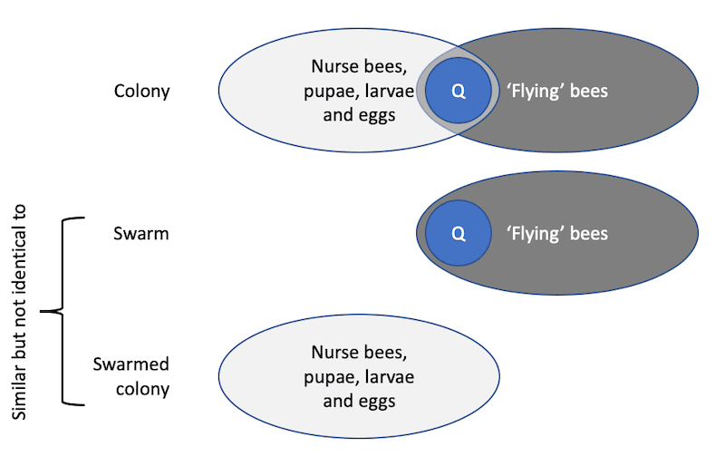 Artificial swarm separation of the colony
