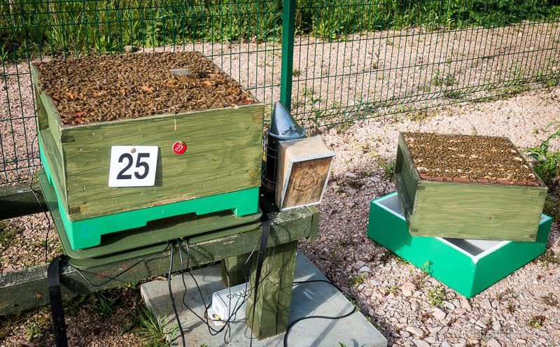 Mid-May ... 45,000 bees, 17 frames of brood, one queen ... now marked