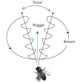 Waggle run error